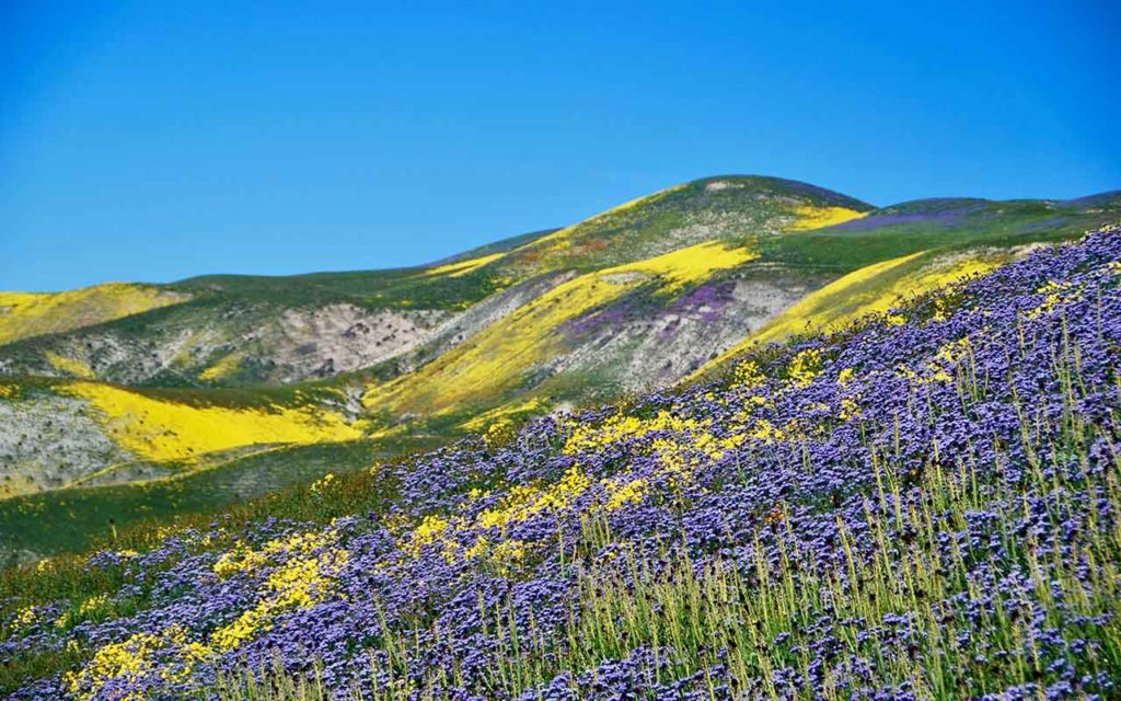 Superbloom California bucket list experiences