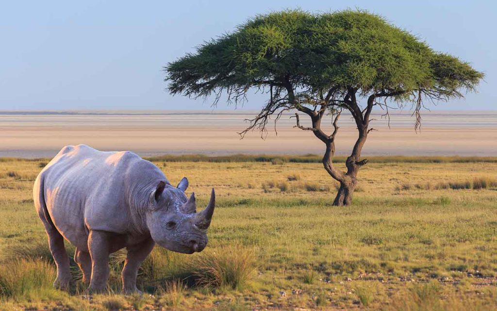 Rhino safari bucket list experience