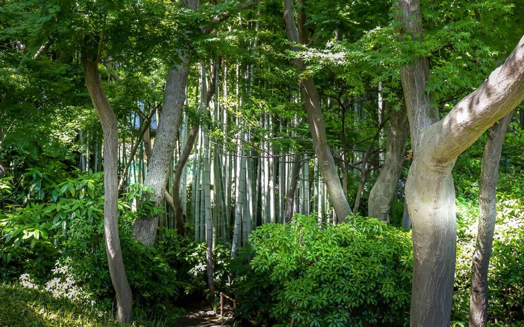 things to do tokyo happoen gardens