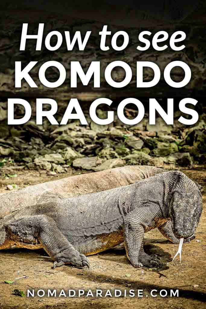 How to See Komodo Dragons