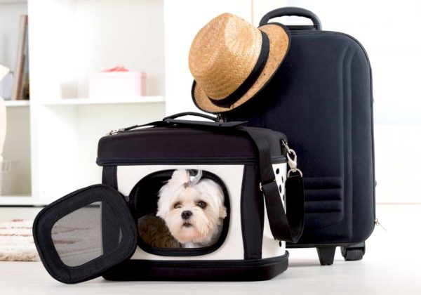 pet travel accessories carrier