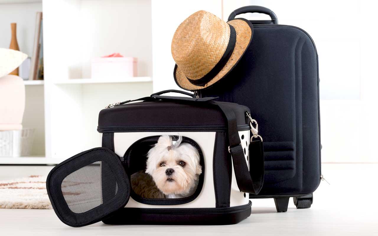 pet travel accessories carrier