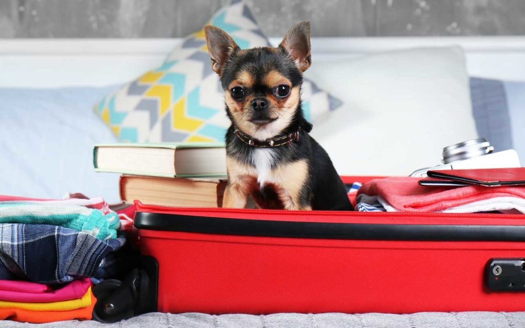 pet travel accessories air travel