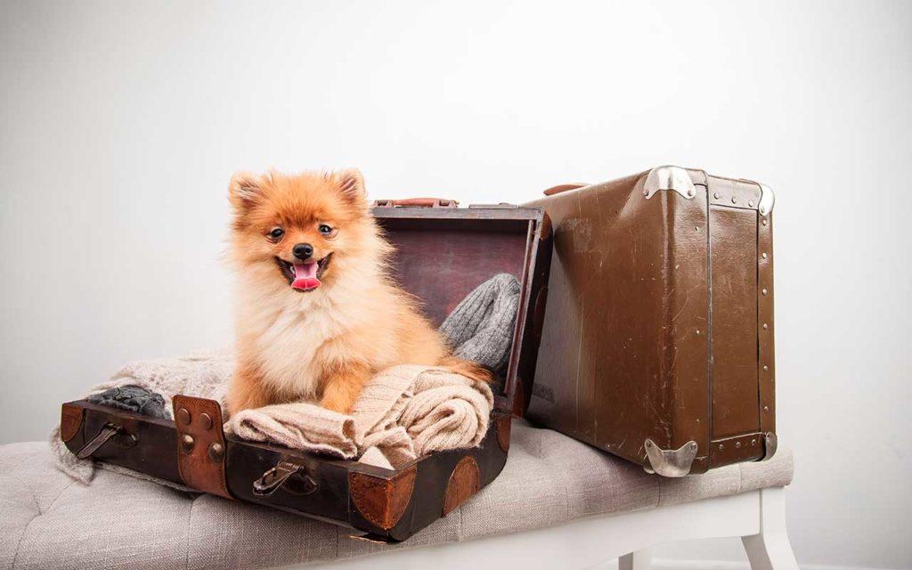 pet travel accessories cute dog