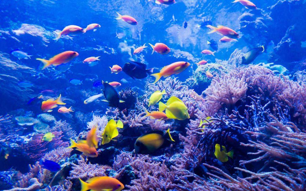 Great Barrier Reef, Australia, underwater sea life