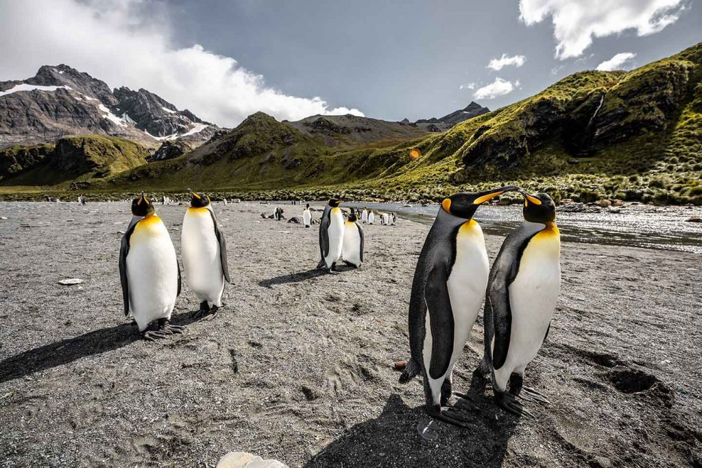 Penguins in South Georgia & South Sandwich Islands