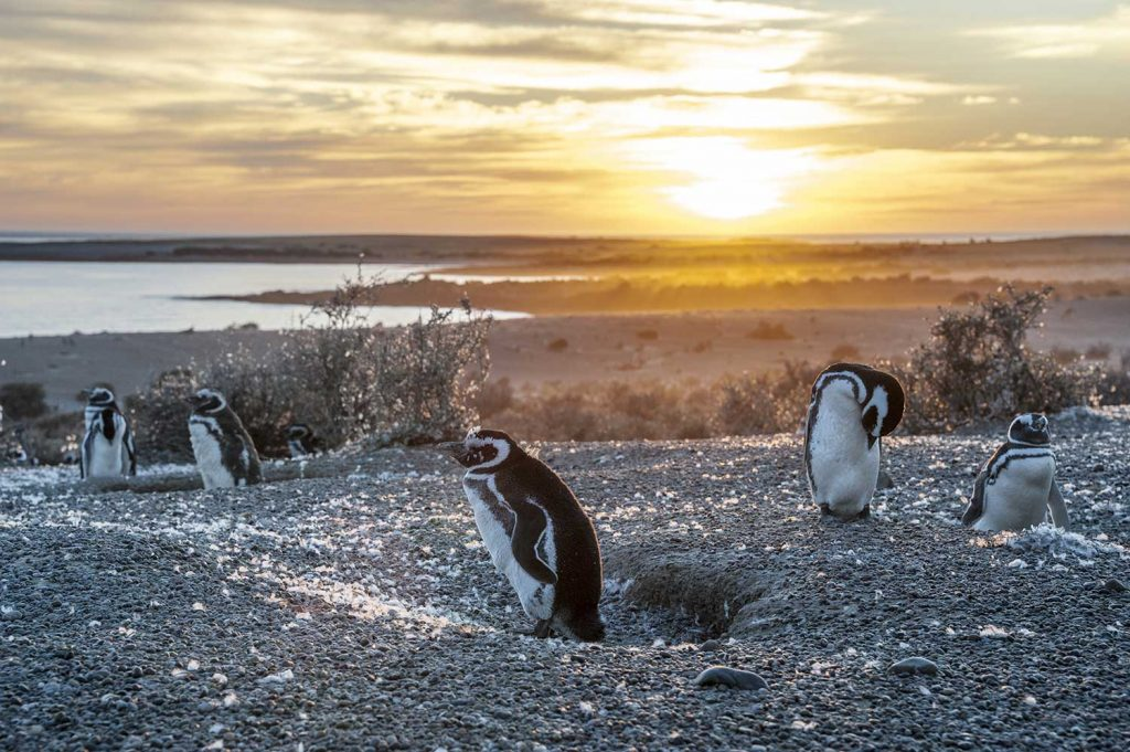Penguins in Punta Tombo, Argentina