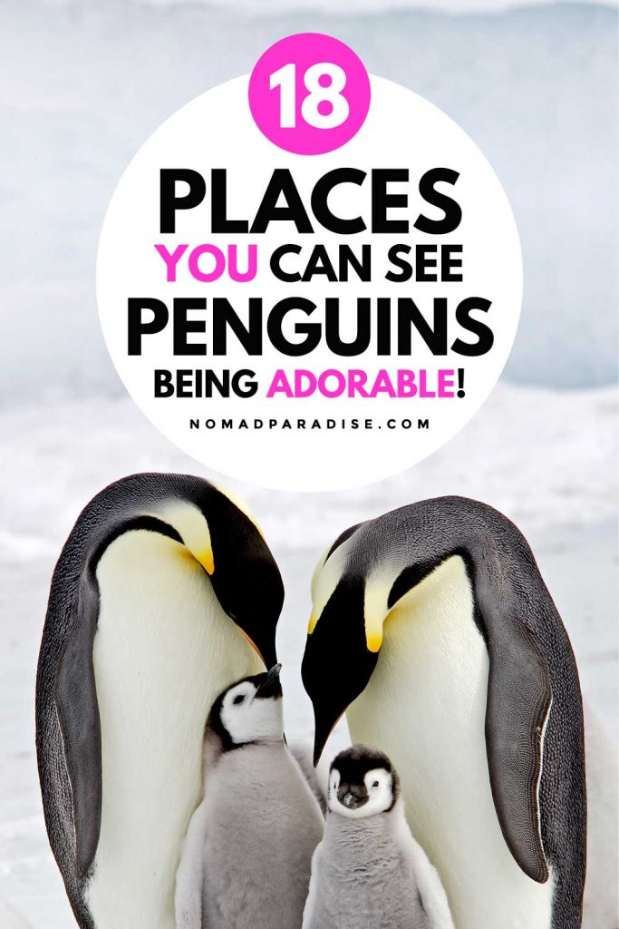Best Places to See Penguins Being Adorable - Nomad Paradise