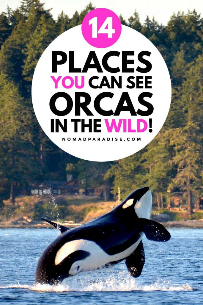 14 best places to see orcas in the wild - Nomad Paradise