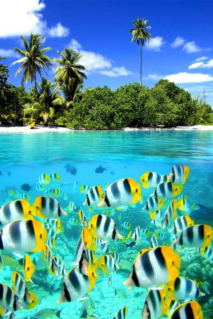 Paradise islands: Tahiti, French Polynesia