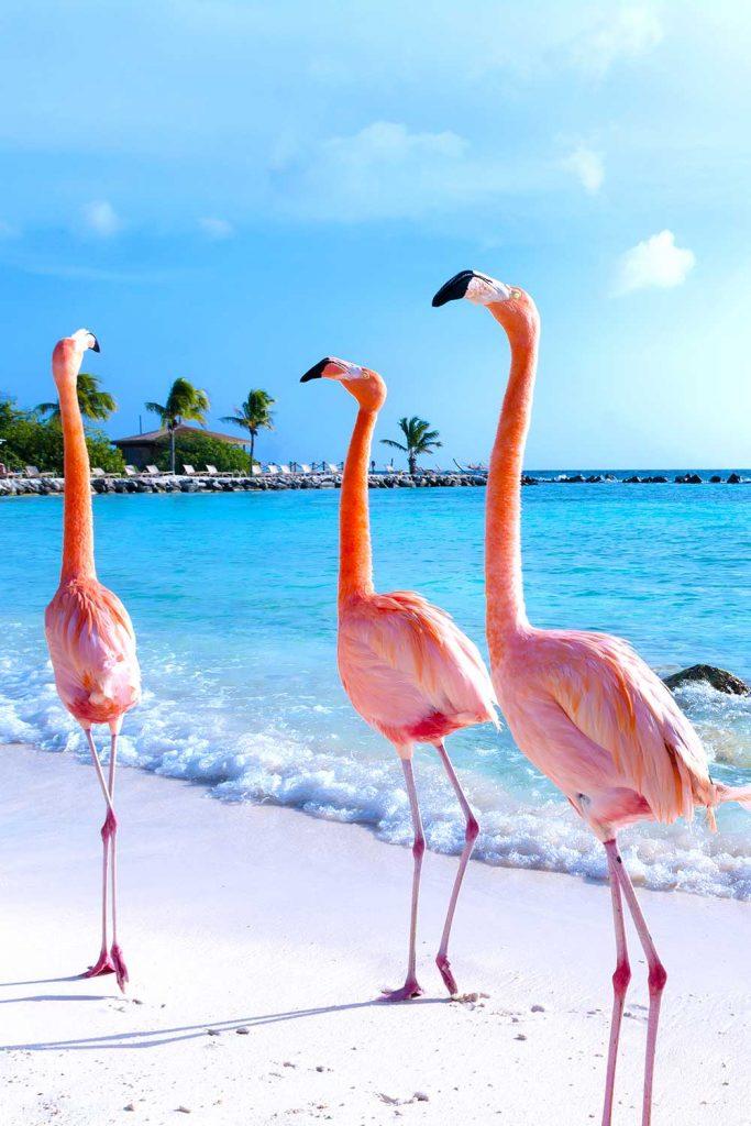 Paradise island: Aruba