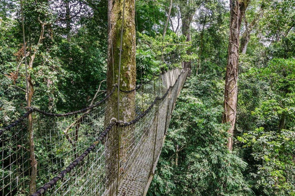 canopy walk nigerian rainforest